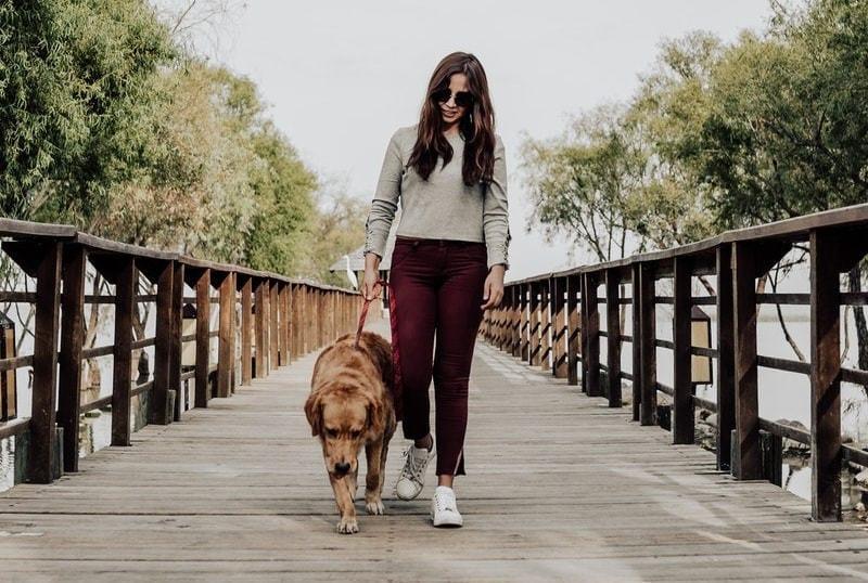 image of Dog Walking